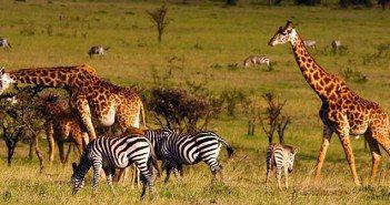 Tourism in Kenya 2015
