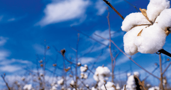 cotton-industry