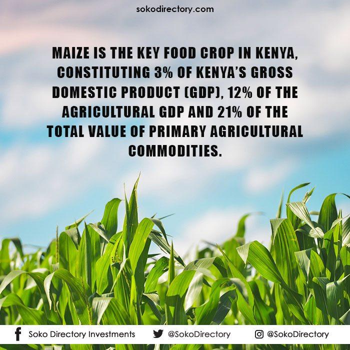 maize-statistics-in-kenya