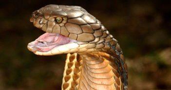 snake-season