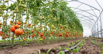 horticulture-sector