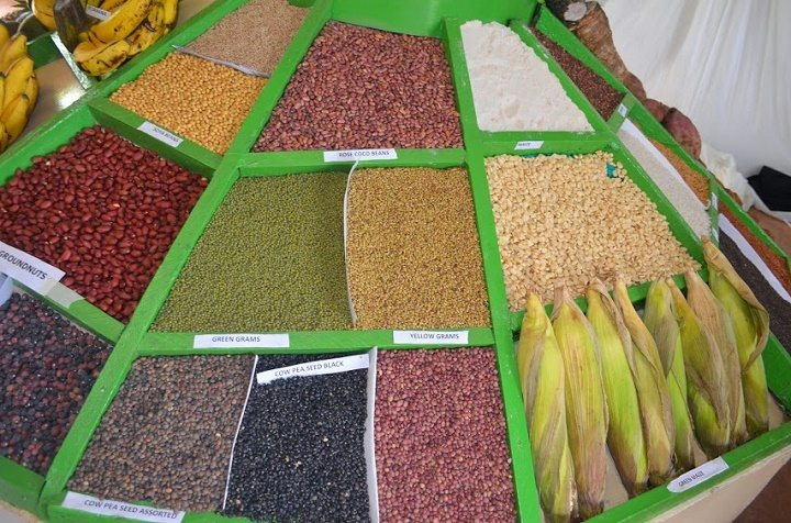 Millet Red Sorghum maize