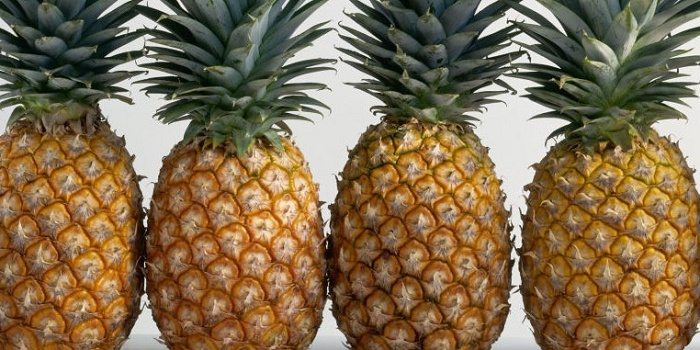 The Lucrative Business of Pineapple Farming in Kenya