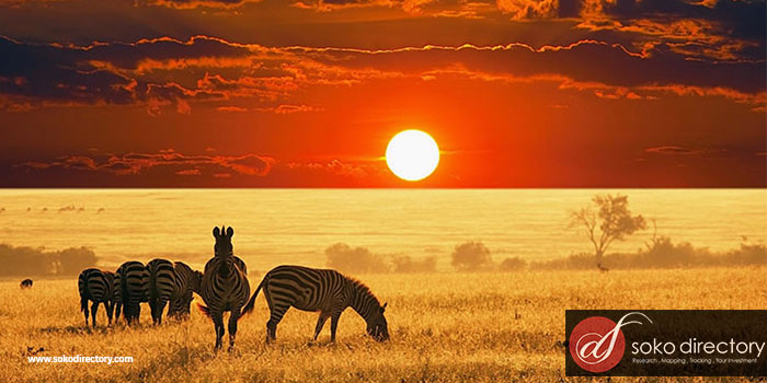 UK Tourists to Kenya Increased by 9.7pc Between January and September