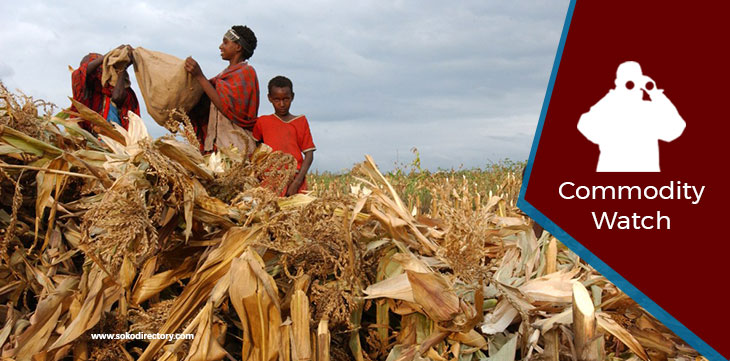 Dry Maize Retailing Highest in Kisumu at Ksh 3,600  and Lowest in Nakuru