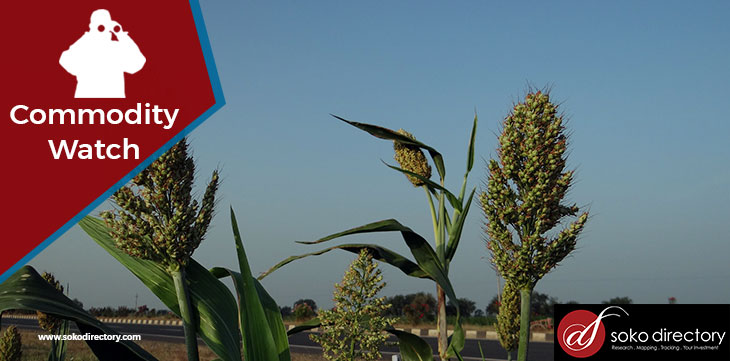Sorghum Retailing Highest in Mombasa and Lowest in Nakuru