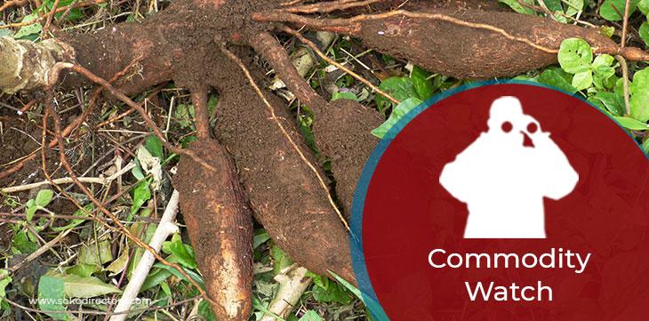 Fresh Cassava Retailing